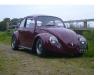 wine-beetle.jpeg